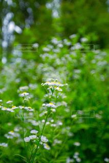 森の花の写真・画像素材[859736]