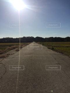 畦道に降り注ぐ太陽 - No.862382