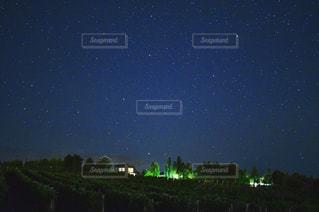 ぶどう畑と星空の写真・画像素材[946698]