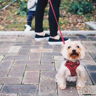 犬と散歩中の親子の写真・画像素材[864303]
