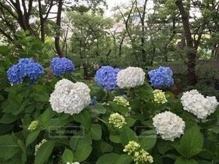花の写真・画像素材[47853]