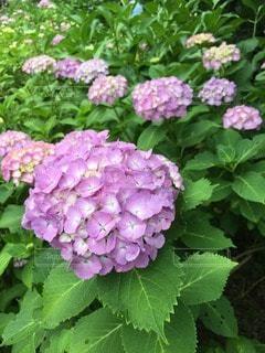 花の写真・画像素材[47868]