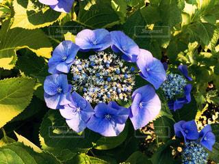 花の写真・画像素材[130464]