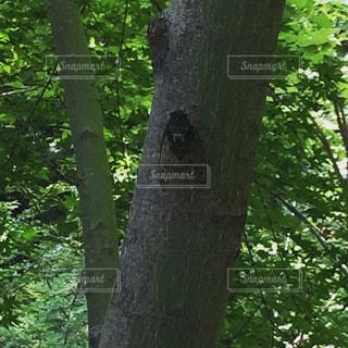 フォレスト内のツリーの写真・画像素材[859697]