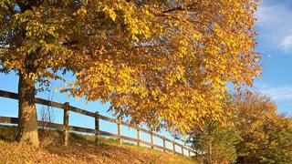 近くの木のアップ - No.866348