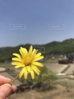 黄色い花を持っている手の写真・画像素材[866359]