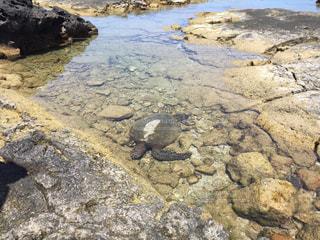 ハワイ島のウミガメの写真・画像素材[865405]