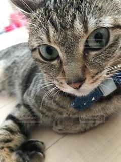 近くに猫のアップの写真・画像素材[860152]
