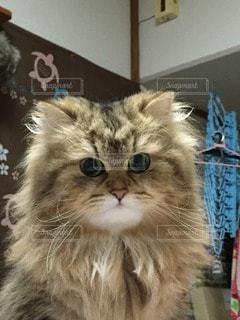 No.26614 猫