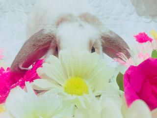 近くの花のアップの写真・画像素材[863073]