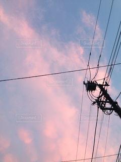 空を飛んでいる鳥の写真・画像素材[861605]