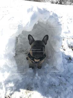 雪で覆われている犬の写真・画像素材[995576]