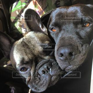 近くにカメラを見て犬のアップの写真・画像素材[1168488]