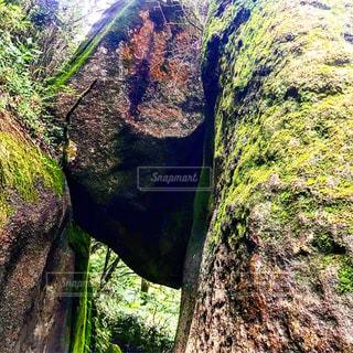 近くに大きな岩のアップの写真・画像素材[1394209]