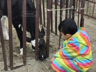 フェンスの横に立っている女の子の写真・画像素材[860257]