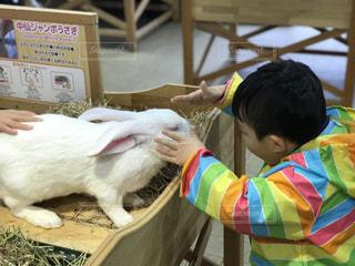 動物のぬいぐるみを持っている小さな男の子の写真・画像素材[860273]