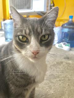 猫の写真・画像素材[1094201]