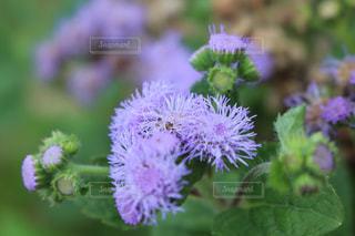 近くの花のアップの写真・画像素材[861412]