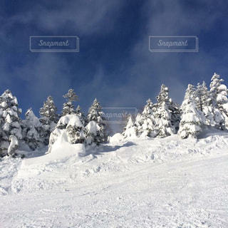 雪に覆われた斜面の写真・画像素材[863996]