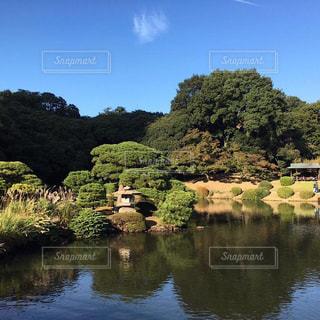木々 に囲まれた水の体 - No.864003
