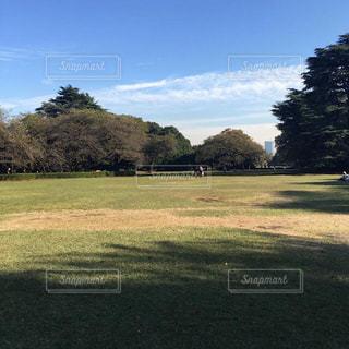 背景の木と大規模なグリーン フィールド - No.864004