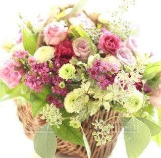 花の写真・画像素材[11973]