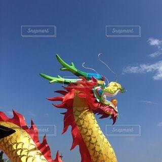 龍の写真・画像素材[12177]