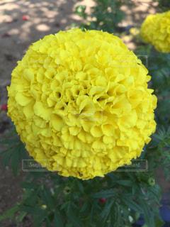 近くの花のアップの写真・画像素材[860360]
