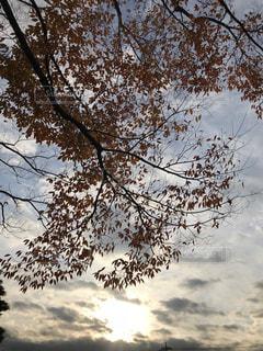 沈み行く秋の写真・画像素材[877735]