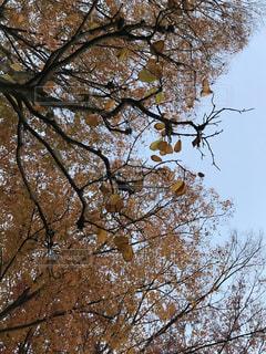 秋の色の写真・画像素材[879574]
