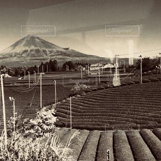 富士山と茶畑 - No.860991