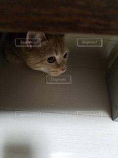 獲物を狙ってる猫 - No.861790