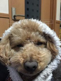 犬の写真・画像素材[63542]