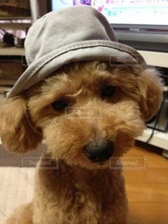 犬の写真・画像素材[75323]
