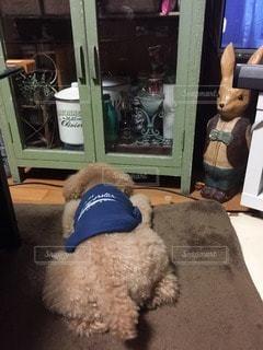 犬の写真・画像素材[84413]
