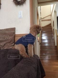 犬の写真・画像素材[84420]