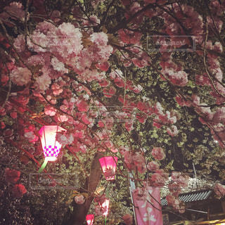 ピンクの花のグループの写真・画像素材[860264]