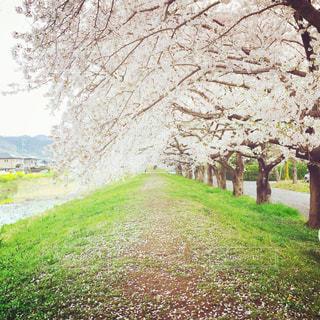 草と木とパスの写真・画像素材[866707]