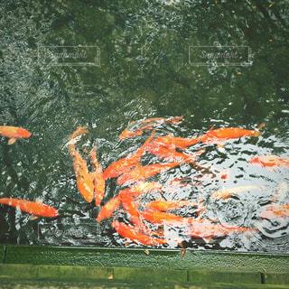 オレンジ色の花のグループの写真・画像素材[866716]