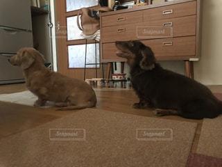 鏡の前で床の上に横たわる犬の写真・画像素材[862568]