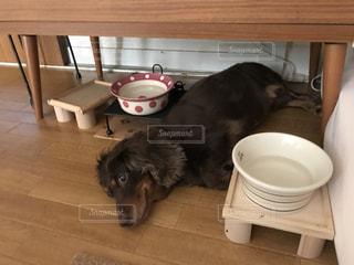 木製の床の上に座っている犬の写真・画像素材[862571]