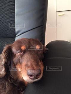 カメラを見て犬の写真・画像素材[862573]