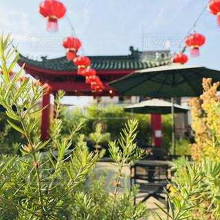 中華街の屋上庭園の写真・画像素材[1131745]