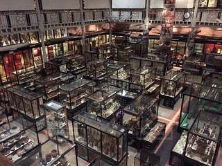 オックスフォード大学自然史博物館の写真・画像素材[867620]