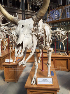 オックスフォード大学自然史博物館の写真・画像素材[867621]