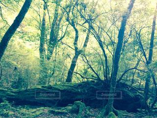 森の中の写真・画像素材[863988]