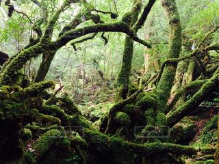 森のゲートの写真・画像素材[863989]