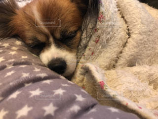 近くでベッドの上で横になっている犬のアップの写真・画像素材[861565]