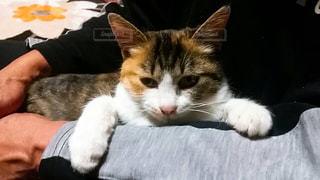 猫の写真・画像素材[860262]