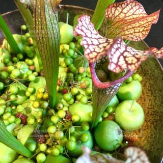 食虫植物 - No.862306